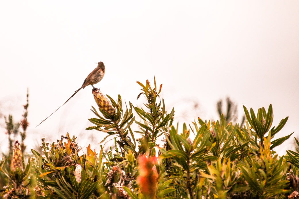 Safari en Afrique du sud - oiseau du bush