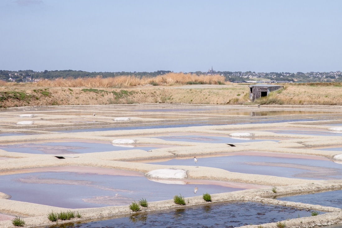 Loire Atlantique - Guerande marais salans