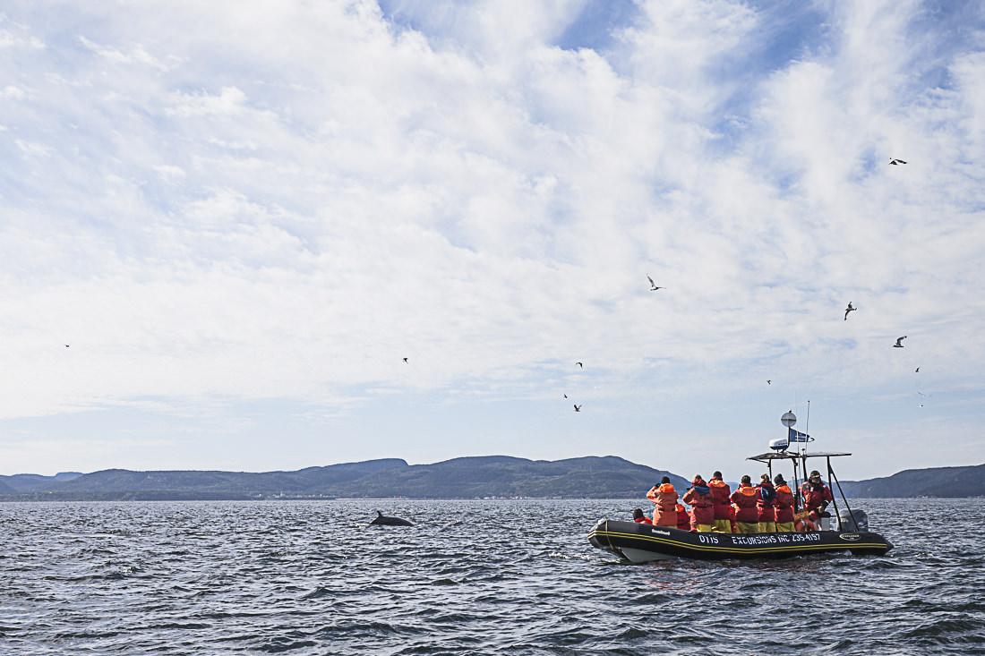 Impossible d'aller sur le fjord du Saguenay sans aller voir les baleines à Tadoussac sur le Saint Laurent