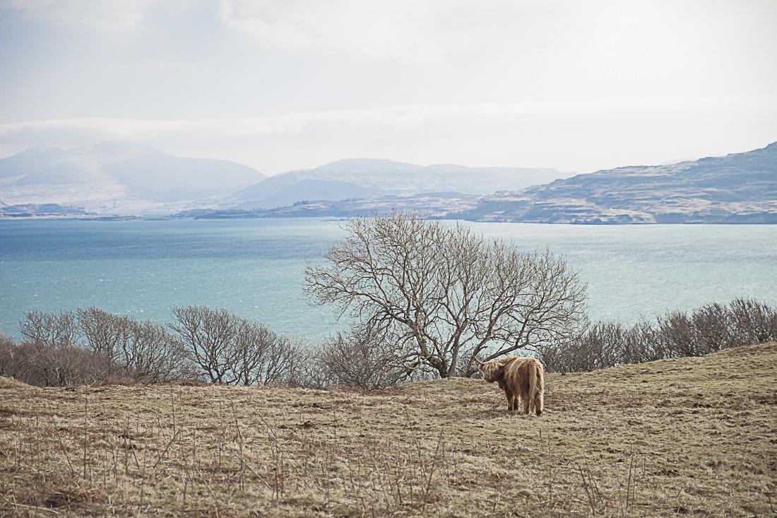 Impossible de passer à côté des vaches Highlands et des moutons où que ce soit en Ecosse