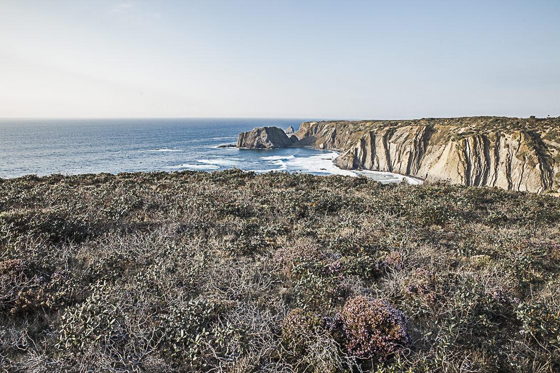 Les bruyères sur les falaises au Portugal vers Arrafina