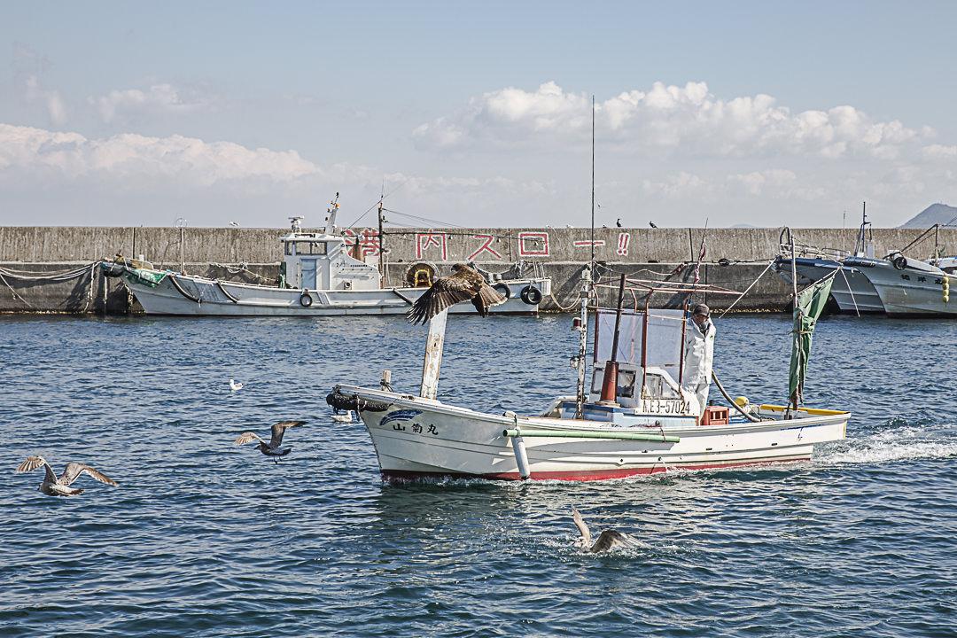 A Toshi-Jima, les bateaux rentrent au port juste avant la criée