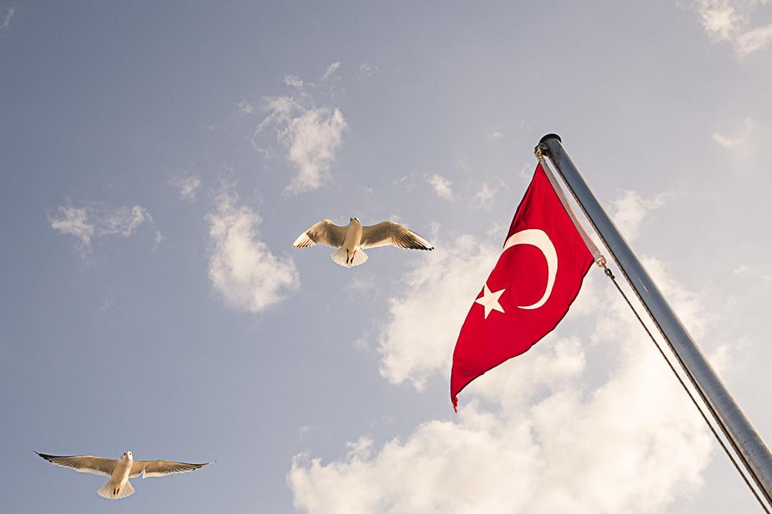 Magie d'istanbul - les mouettes du Bosphore