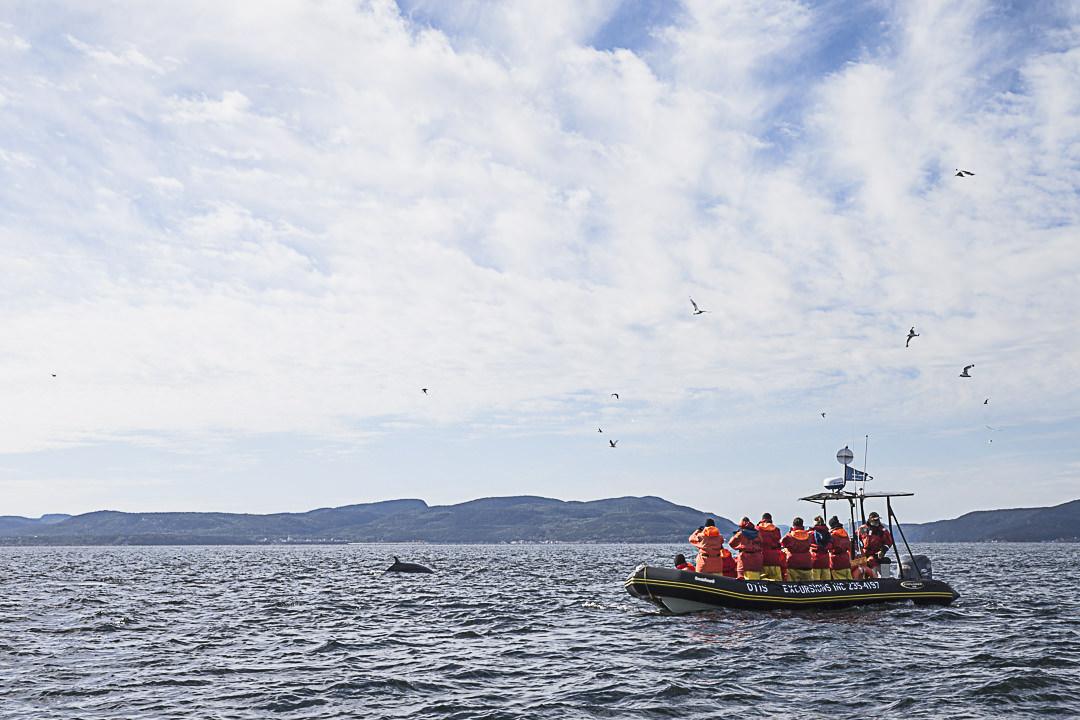 Observer le baleines de Tadoussac en zodiac