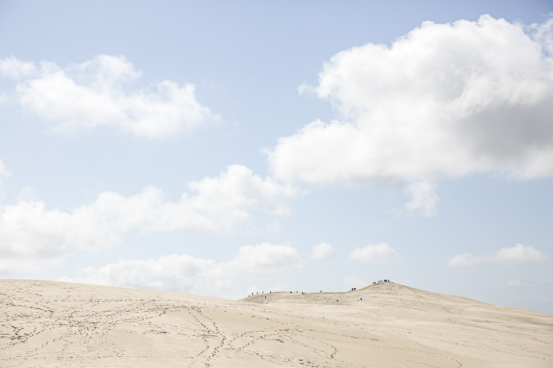 Les fourmis de la dune du Pyla