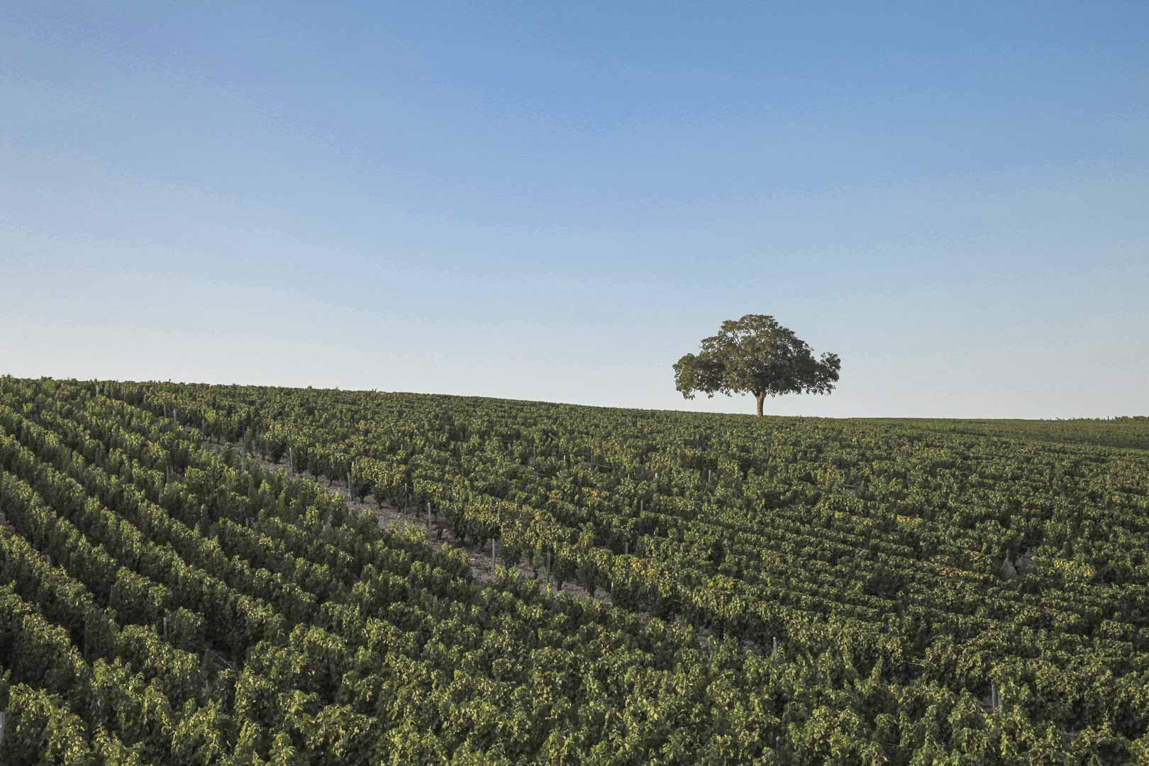 Berry ce trésor caché - Chateau de la Verrerie