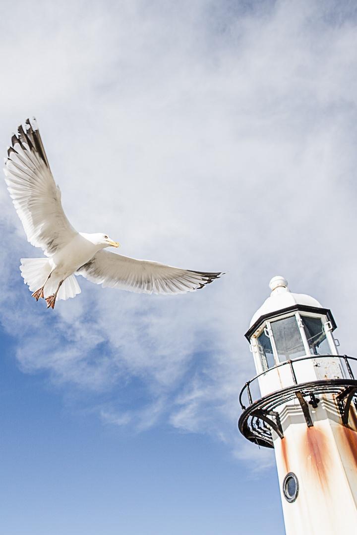 Road Trip en Cornouailles - La mouette du phare de Saint Ives