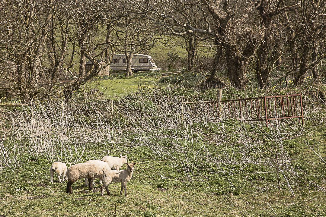 Road Trip en Cornouailles - Jamais un voyage sans un mouton