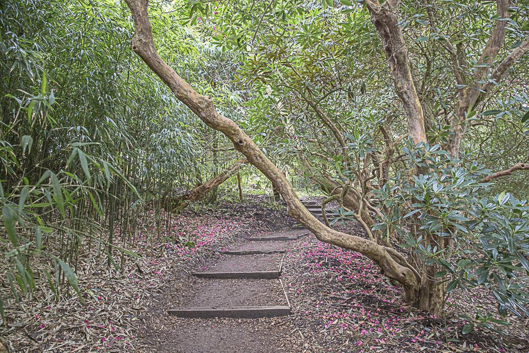 Road Trip en Cornouailles - les sous-bois de la jungle des jardins de Heligan