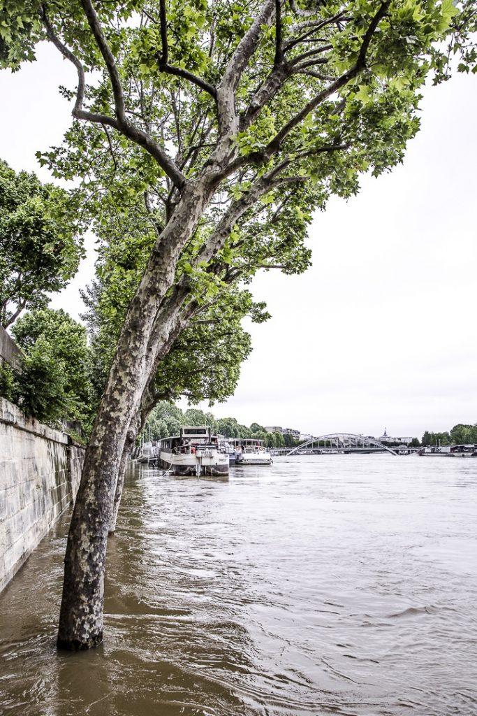Les inondations de Paris 2016 - Les arbres les pieds dans l'eau