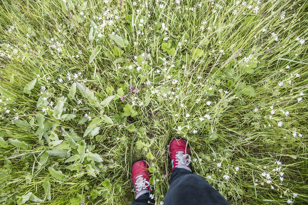 marcher dans les herbes de la forêt noire