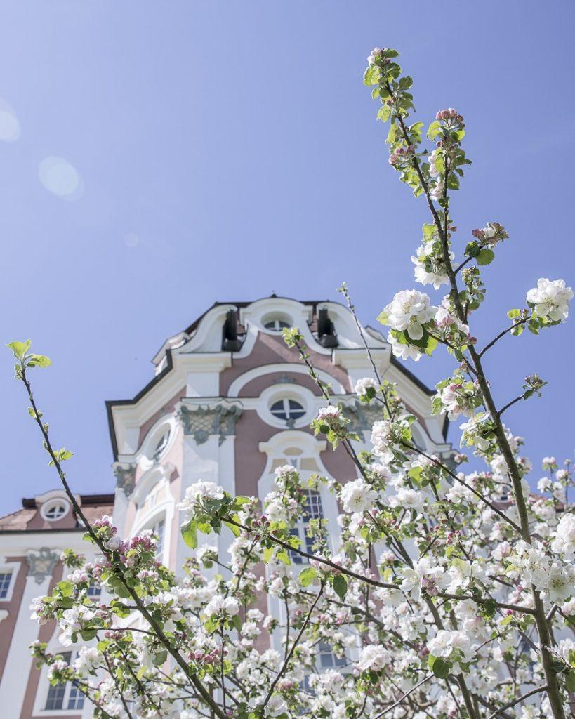 les cerisiers en fleurs à l'abbaye de Wiblingen - Ulm, Allemagne