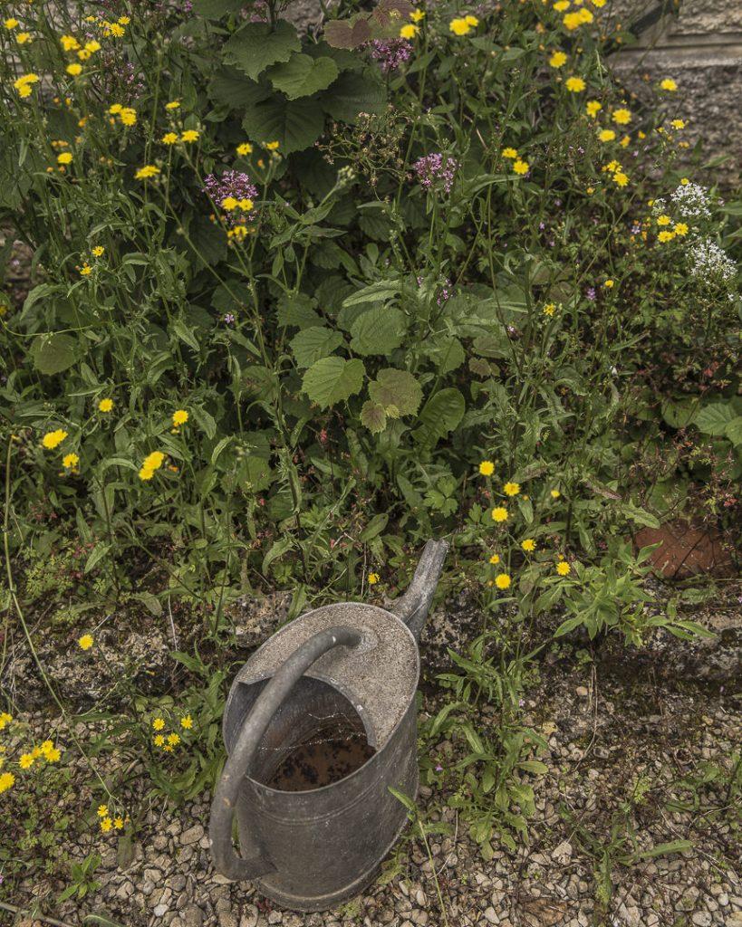 détail du jardin de Pierre Auguste Renoir