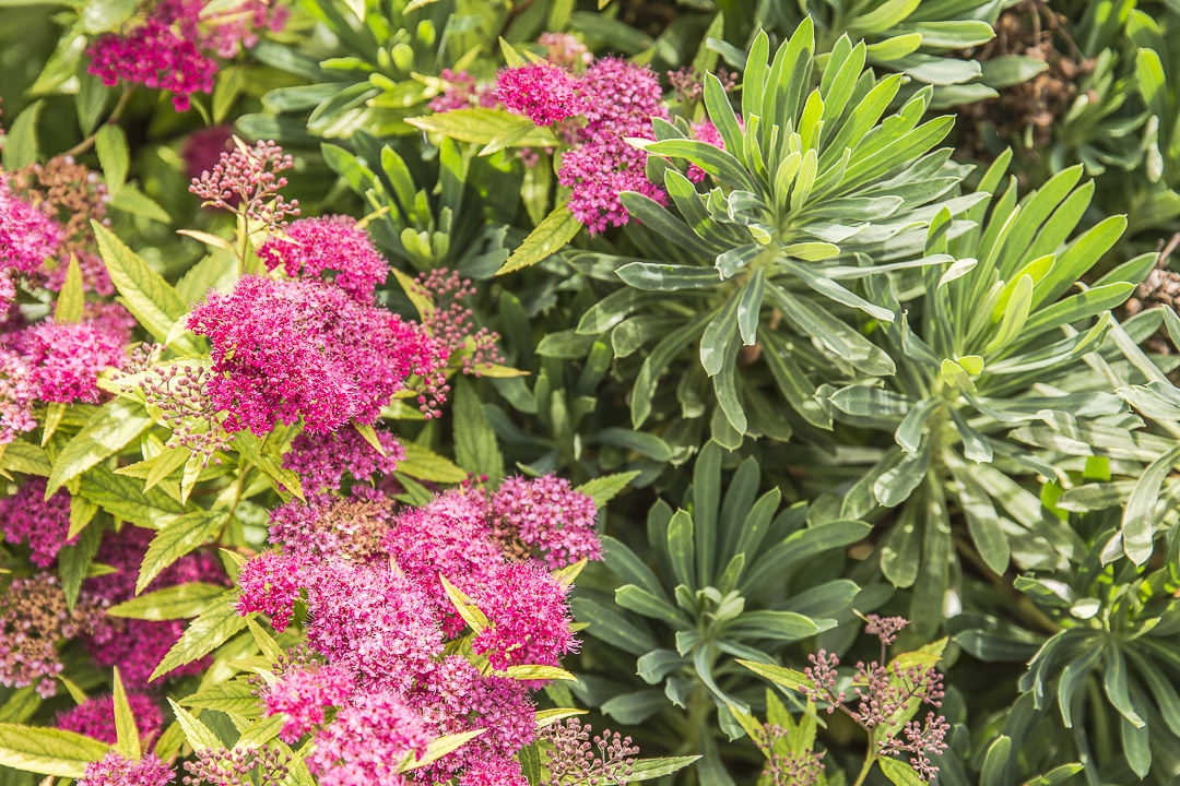 Fleurs du jardin de l'atelier de Pierre Auguste Renoir à Essoyes