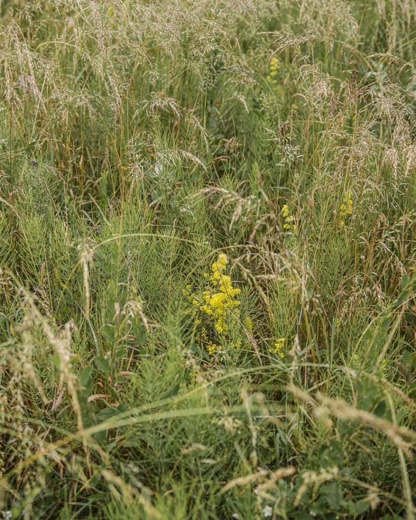 Les herbes du cap Arkona