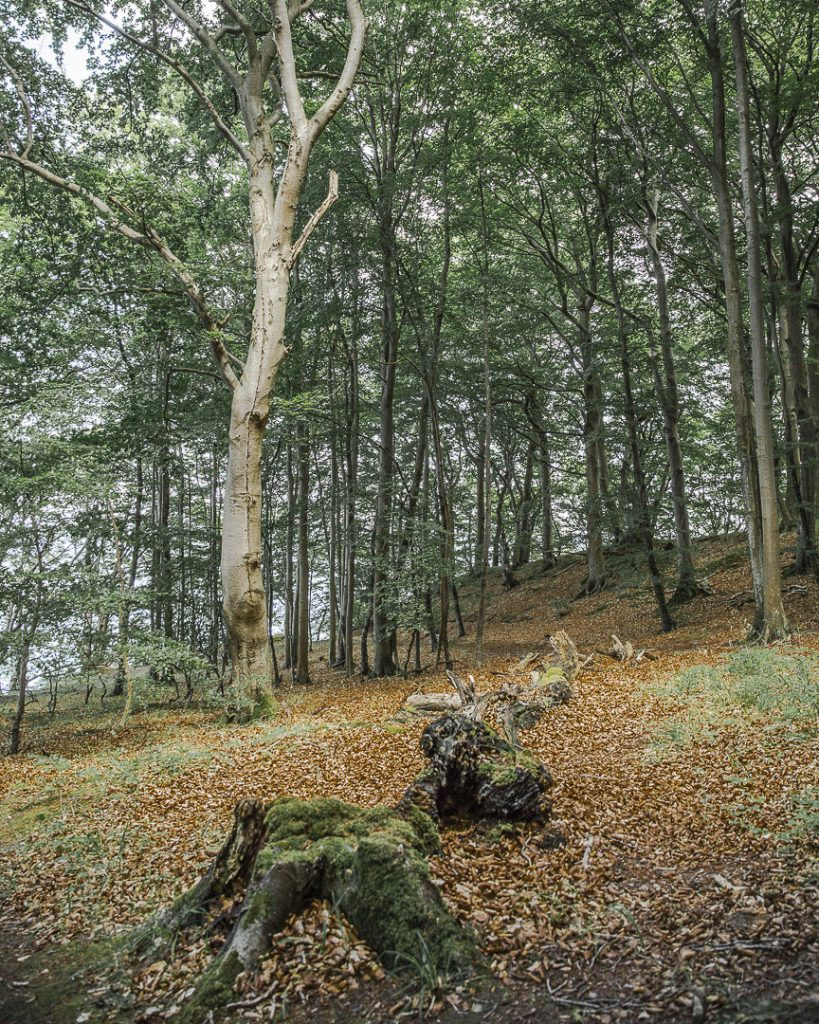 Sous-bois du parc national de Jasmund - Ruegen, Allemagne