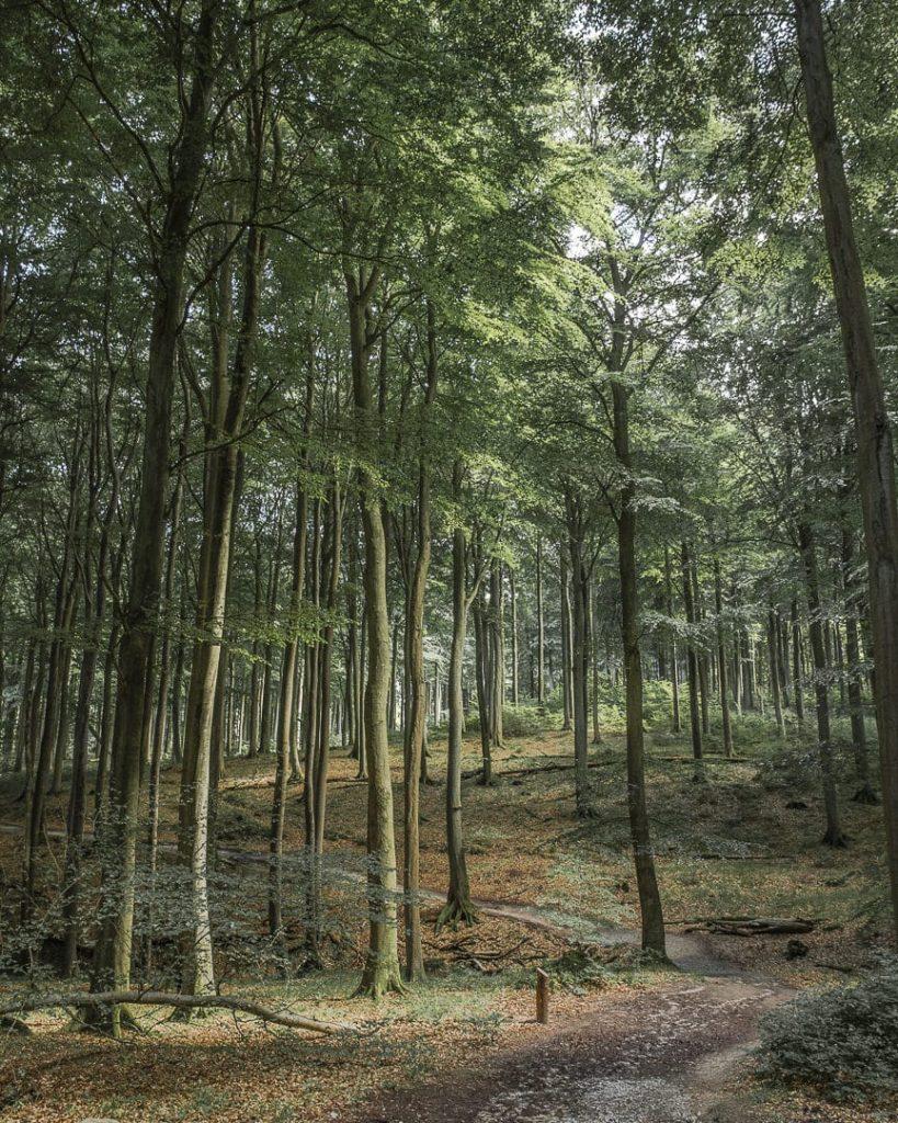 Les sous-bois du parc national de Jasmund - Ruegen, Allemagne