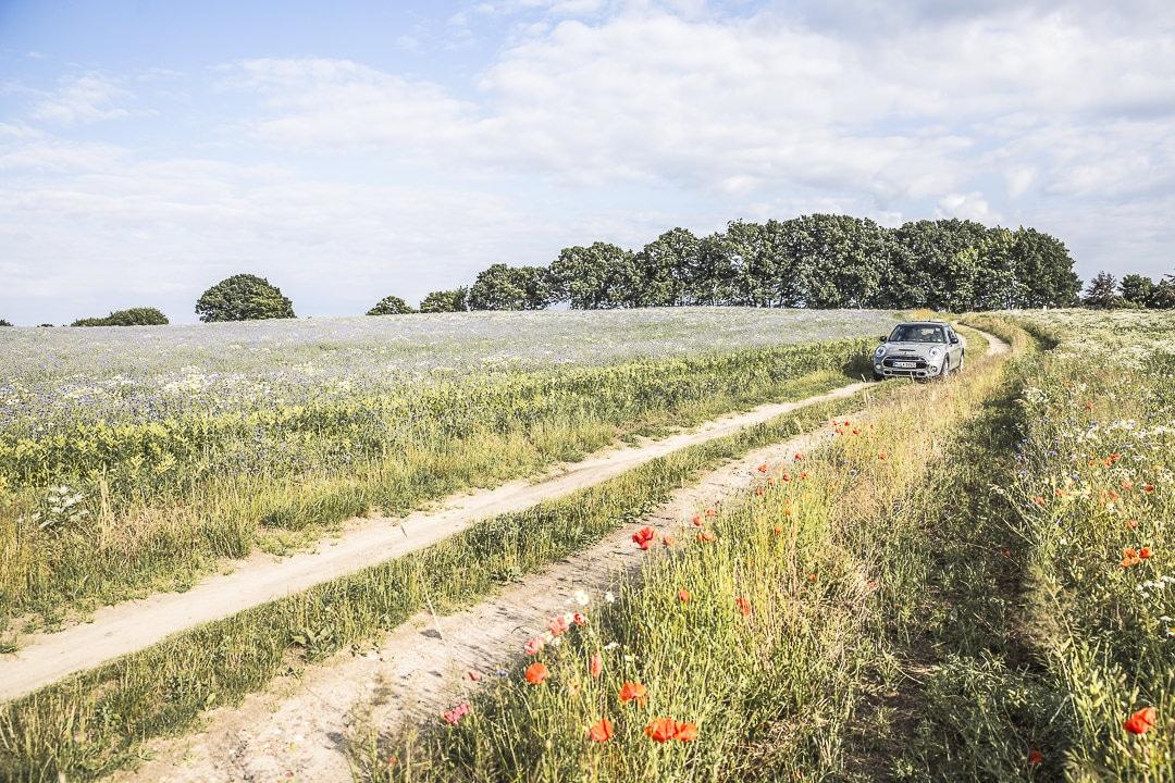 Ma mini dans les champs de Ruegen - Allemagne