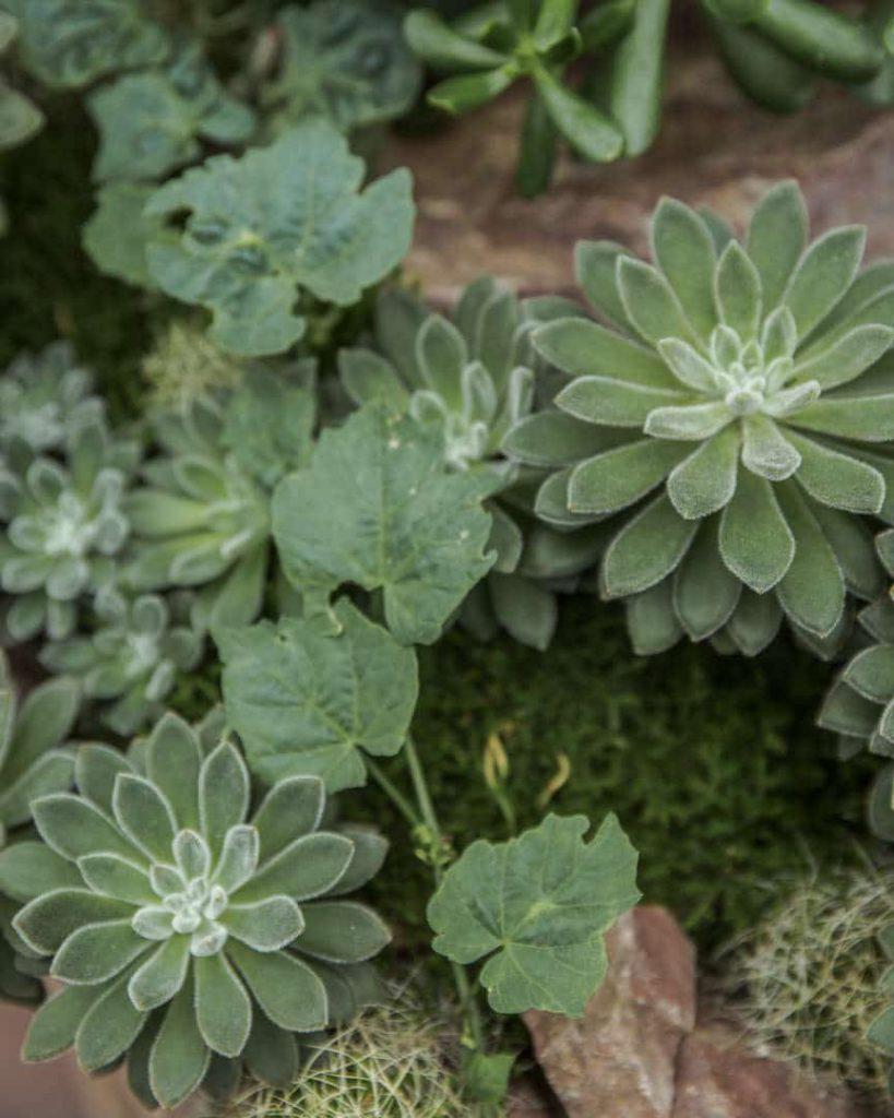 Dans les serres des jardins botaniques royaux d'Edimbourg - Ecosse