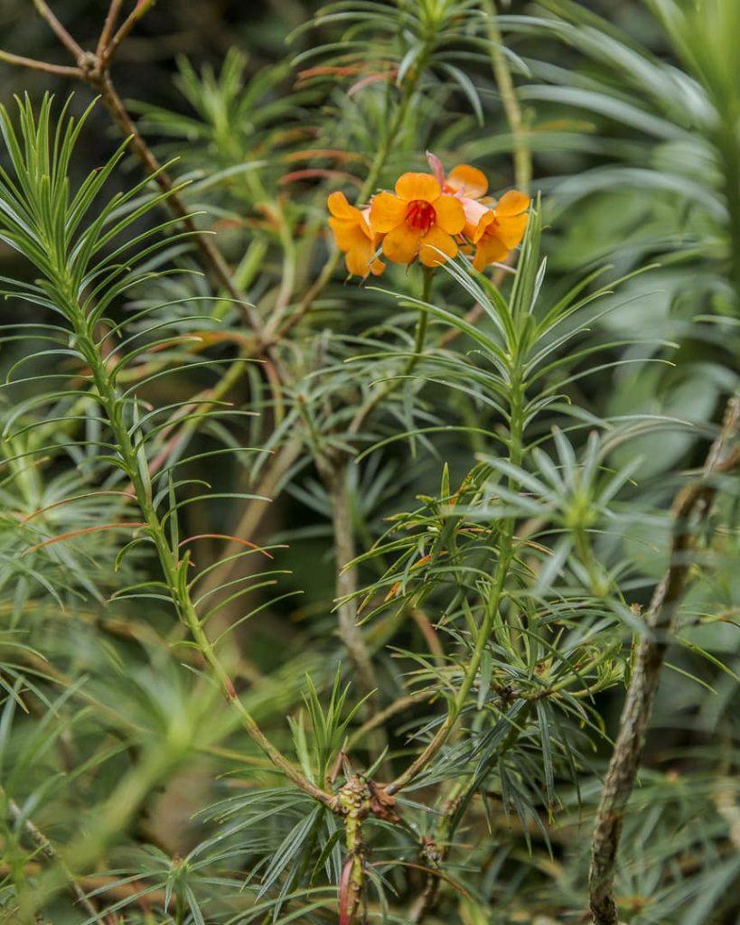 Les jardins botaniques royaux d'Edimbourg - Ecosse