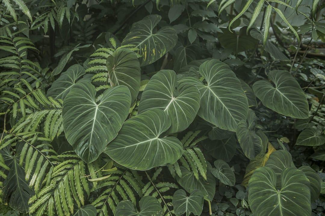 Dans les serres du jardin botanique royal d'Edimbourg - Ecosse