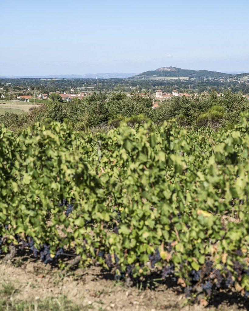 Vue sur Champdieu depuis les vignes - Loire, France