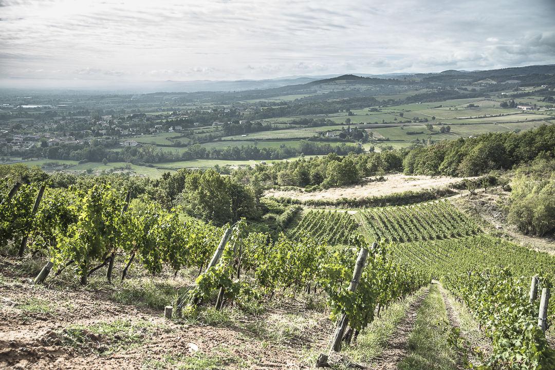 Vue sur les vignes depuis la Madone de Champdieu - Loire, France