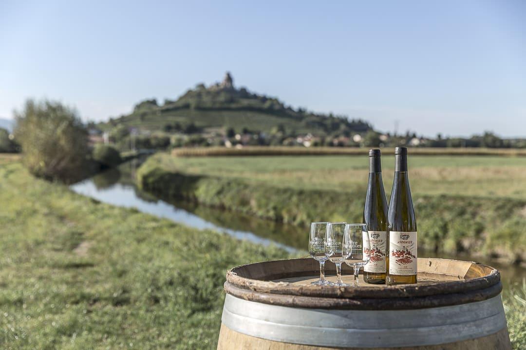 Week-end dans la Loire : dégustation de Viognier de Saint Romain le Puy - Loire , France