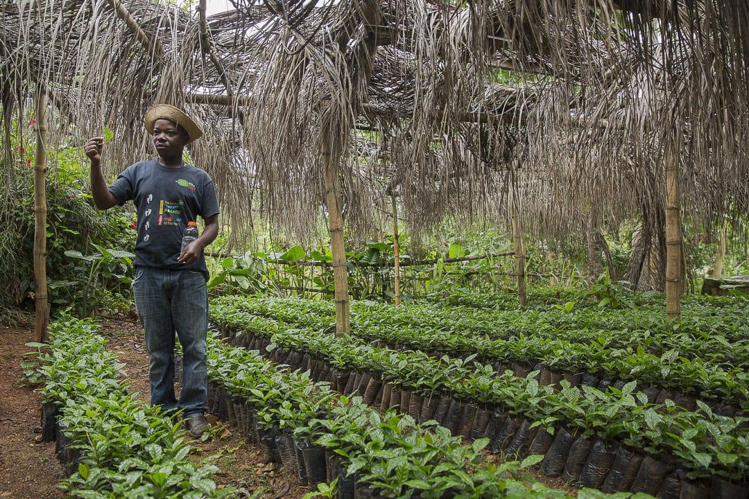 La pépinière de la route du café en Haïti