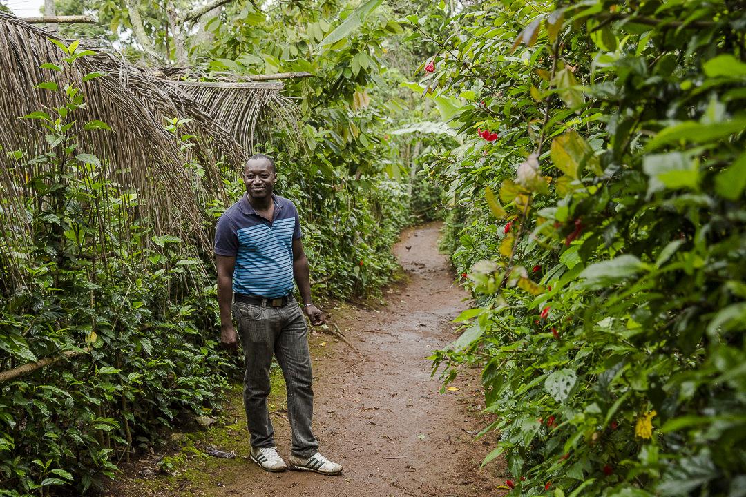 Le chemin joli de la route du café en Haïti