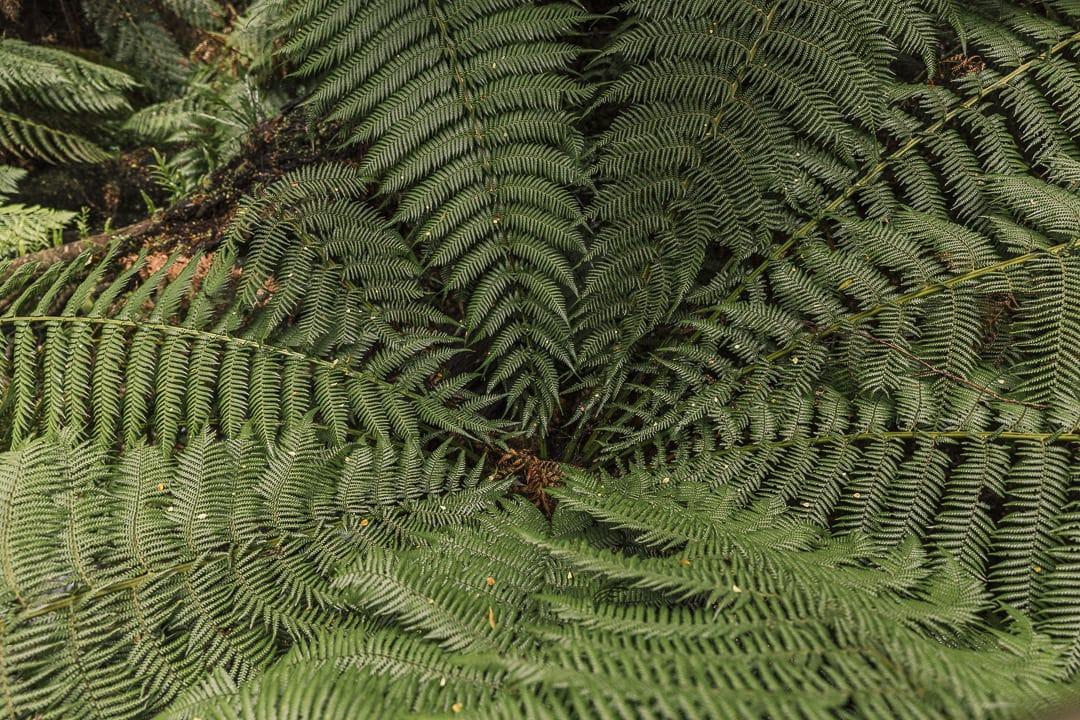 Forêt tropicale Great Otway national Park - Great Ocean Road, Australie