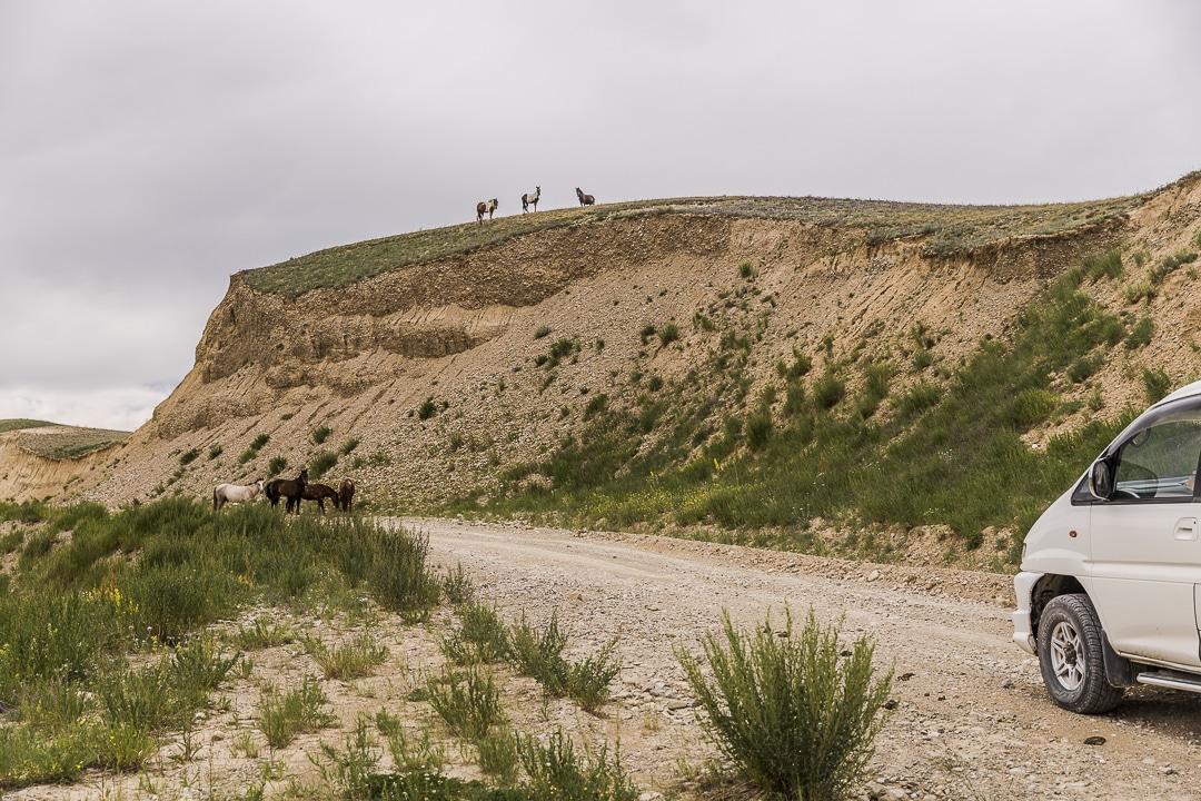 Chevaux sur la route de la soie vers Kazarman - Kirghizstan