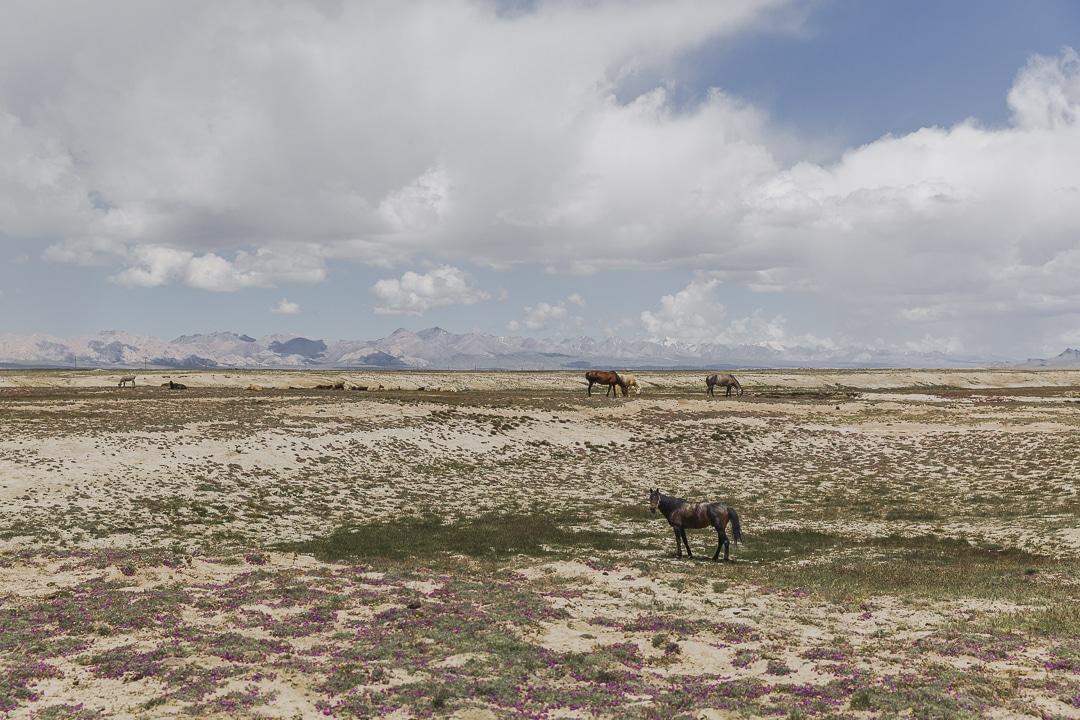 Cheval au lac Chatyr-Koul - Kirghizstan