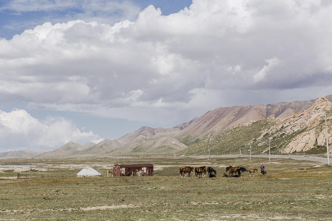 Traite des juments au lac Chatyr-Koul - Kirghizstan