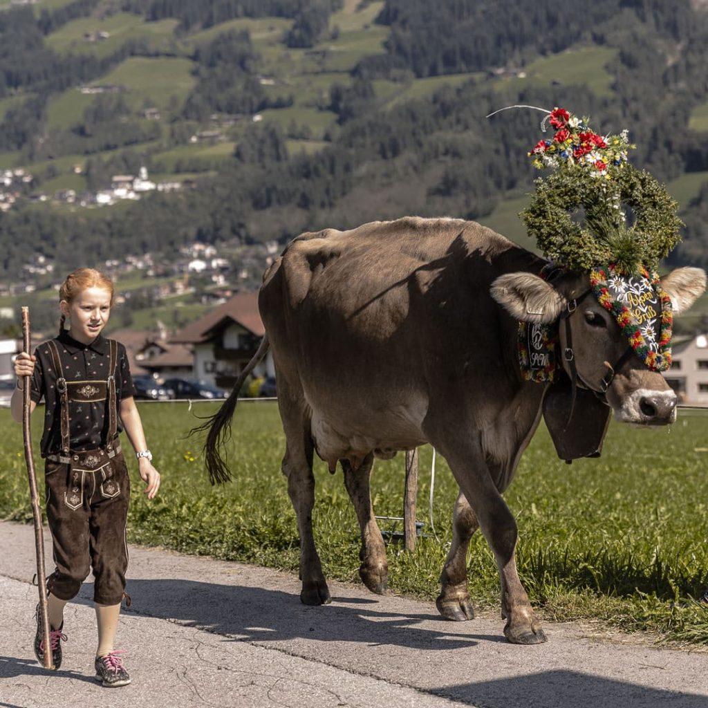 Jour de transhumance dans le Tirol en Autriche #tirol #autriche