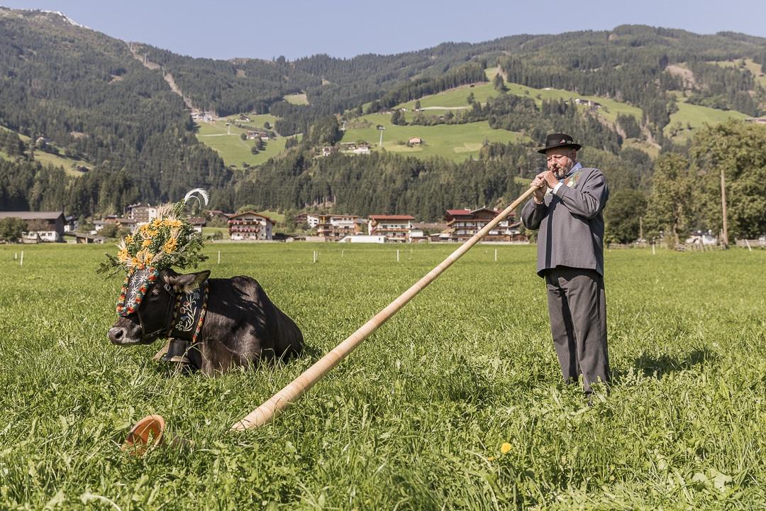 Transhumance en Autriche - Joueur de cor des Alpes #autriche #transhumance