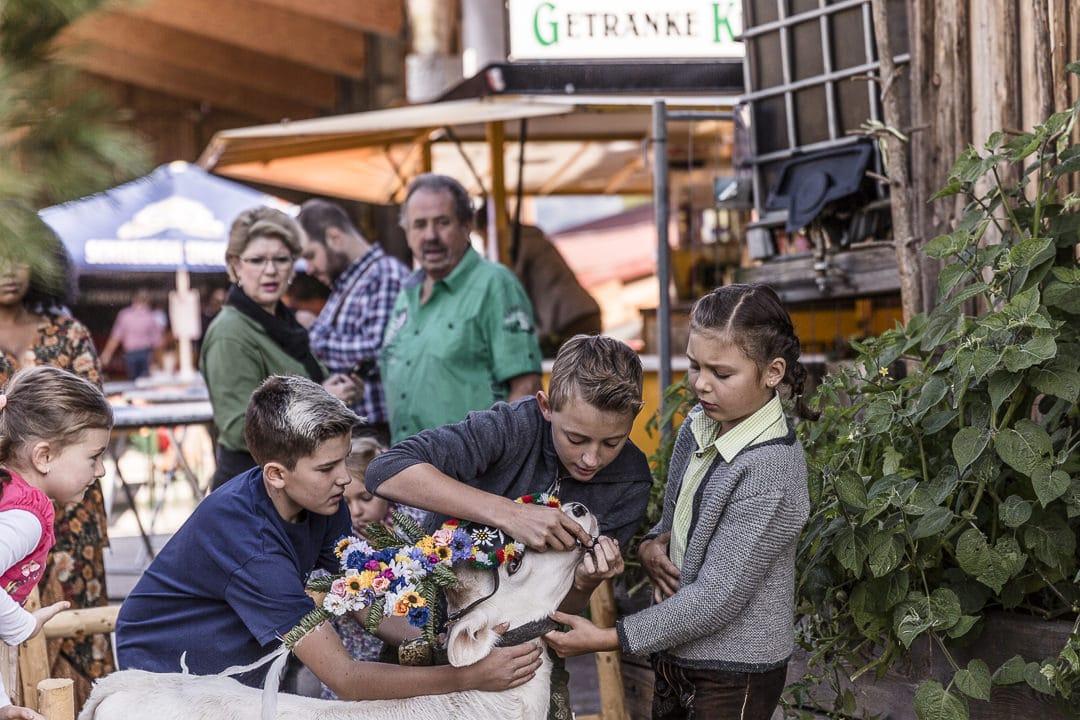 Les enfants un jour de transhumance #autriche #tyrol
