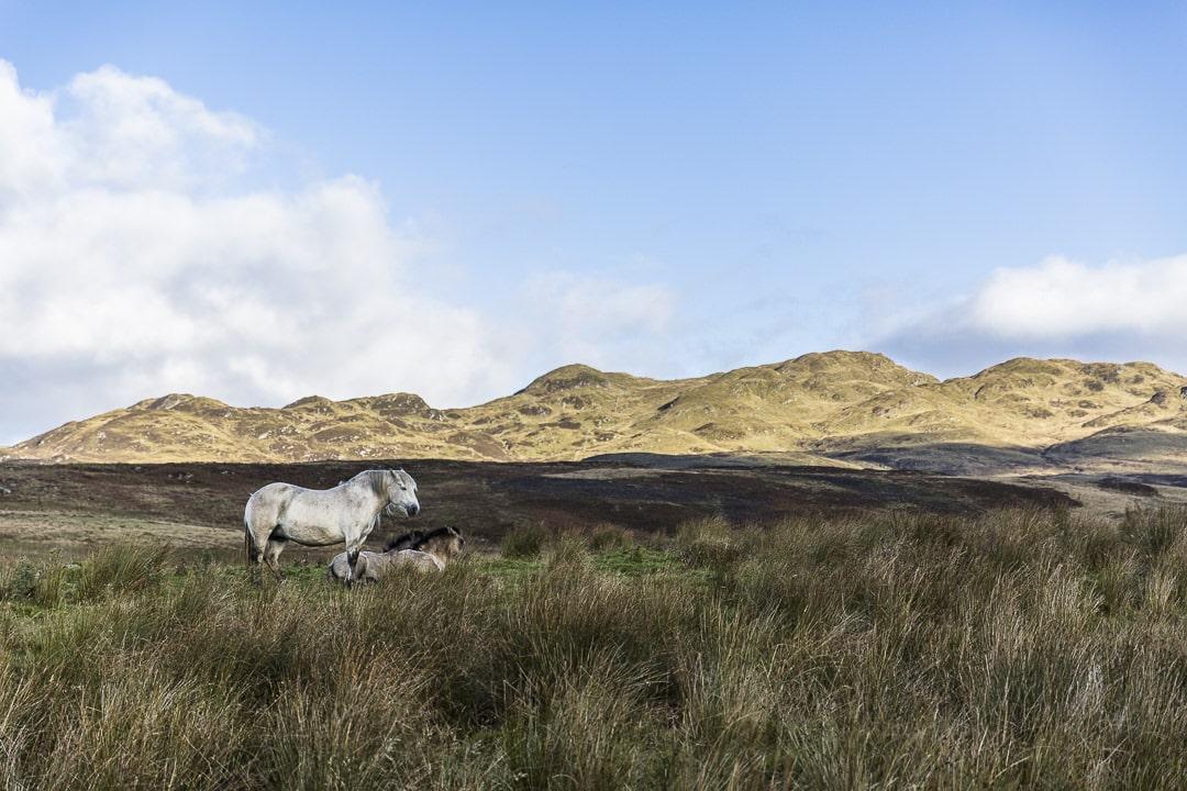 Sublime paysage des Highlands en Ecosse #visitscotland #ecosse