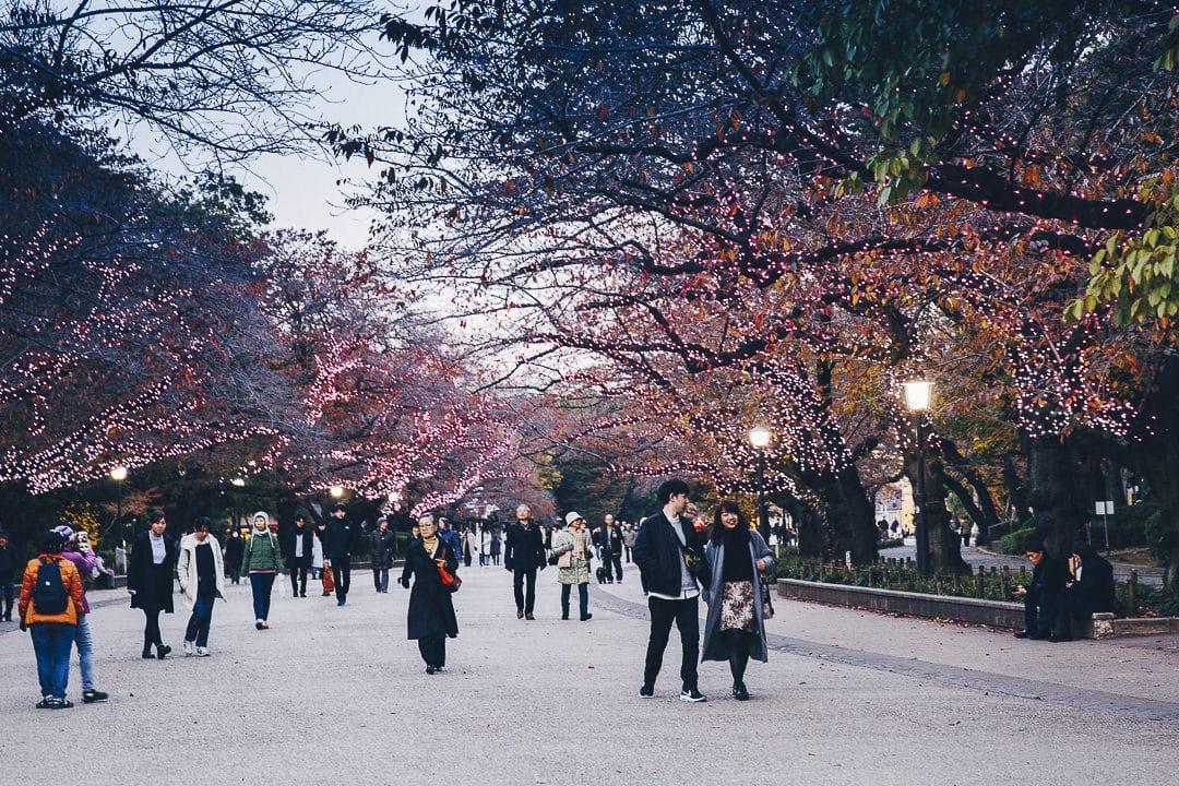 Tokyo en hiver : Sous les sakuras du parc Ueno #japon #tokyo