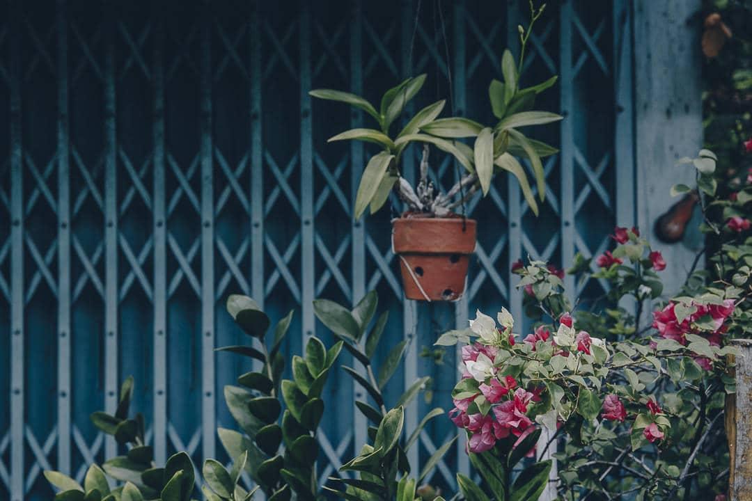 Fleurs suspendues dans le quartier de Kudee Jin à Bangkok #bangkok #thailande