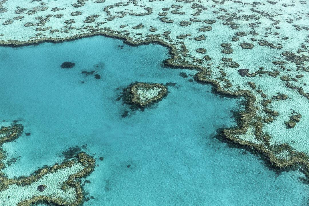 Survoler Hear Reef, ce récif en forme de coeur découvert dans les années 70 en Australie #queensland #australie #whitsundays