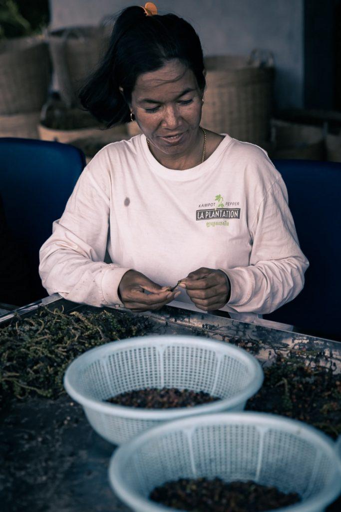 Trieuse de grains de poivre à Kampot dans le sud du Cambodge