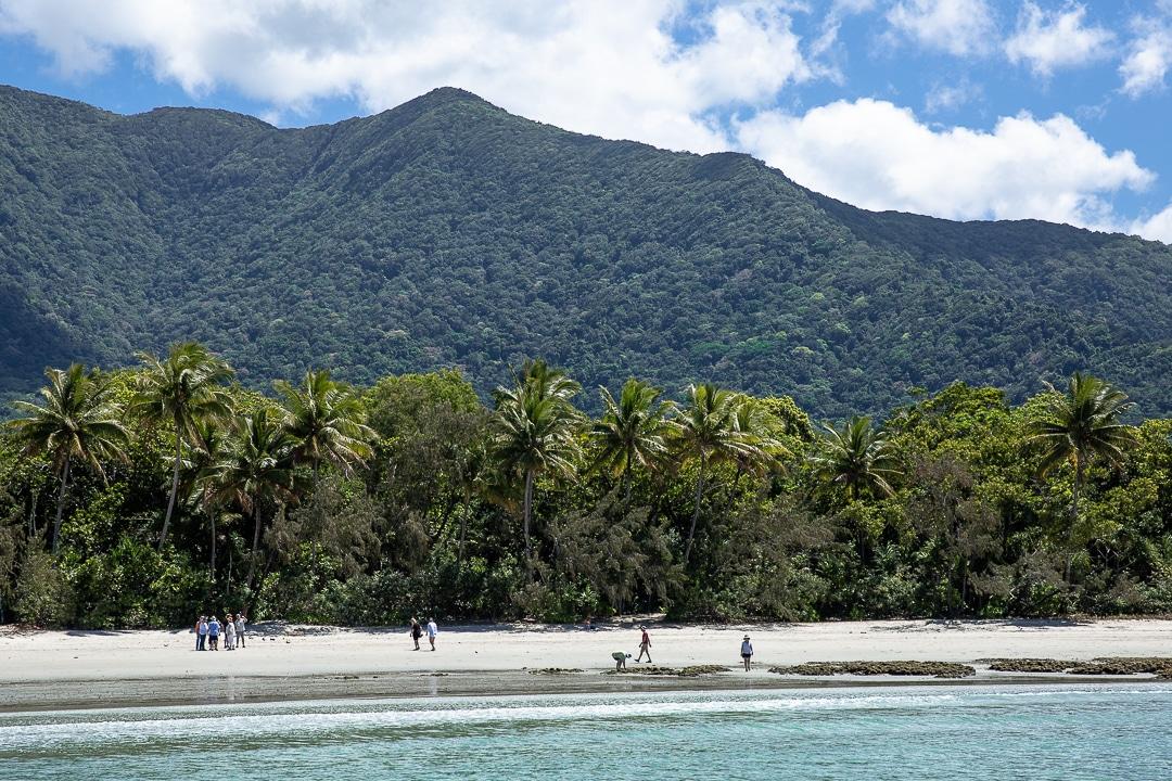 Cape Tribulation ou quand la foret tropicale de Daintree tombe dans la mer de corail #queensland #australie