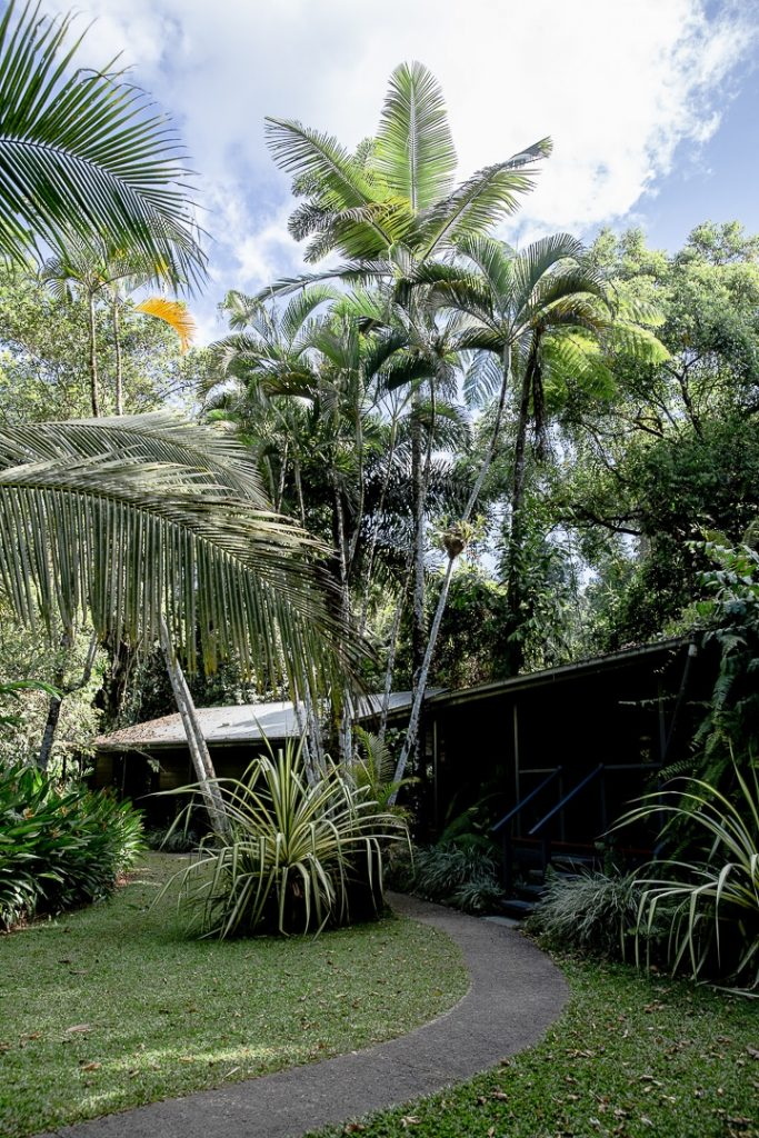 Le Daintree heritage lodge, au coeur de la forêt de Daintree #queensland #australie