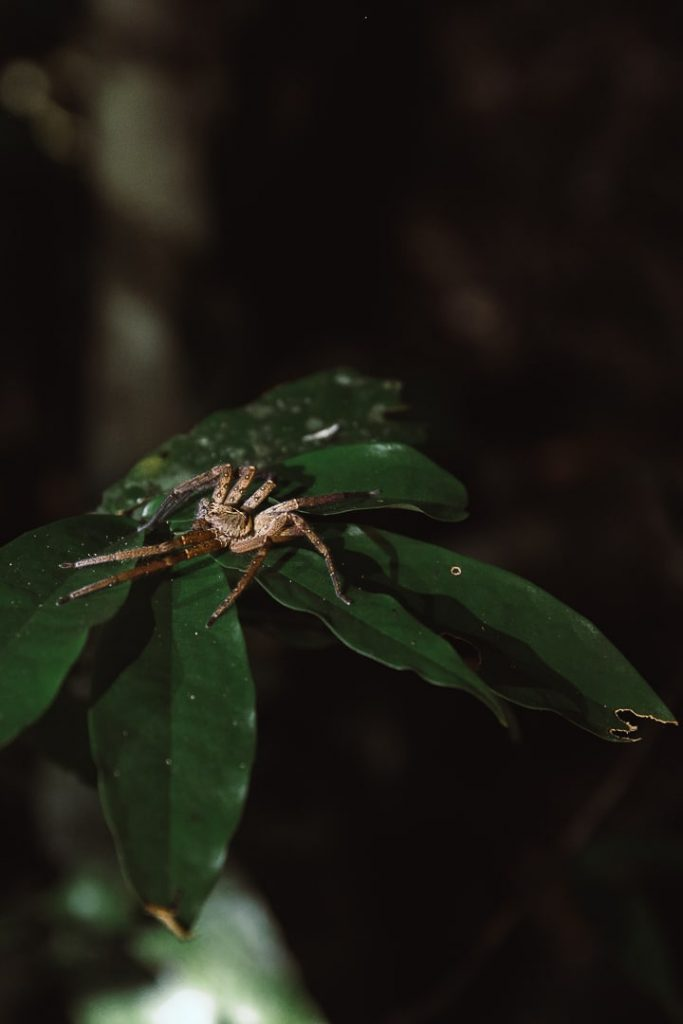Araignée dans la forêt de Daintree en Australie