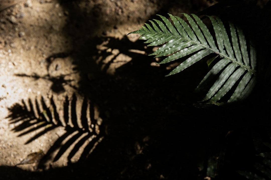 Jeux de lumière dans la forêt tropicale de Daintree #queensland #australie