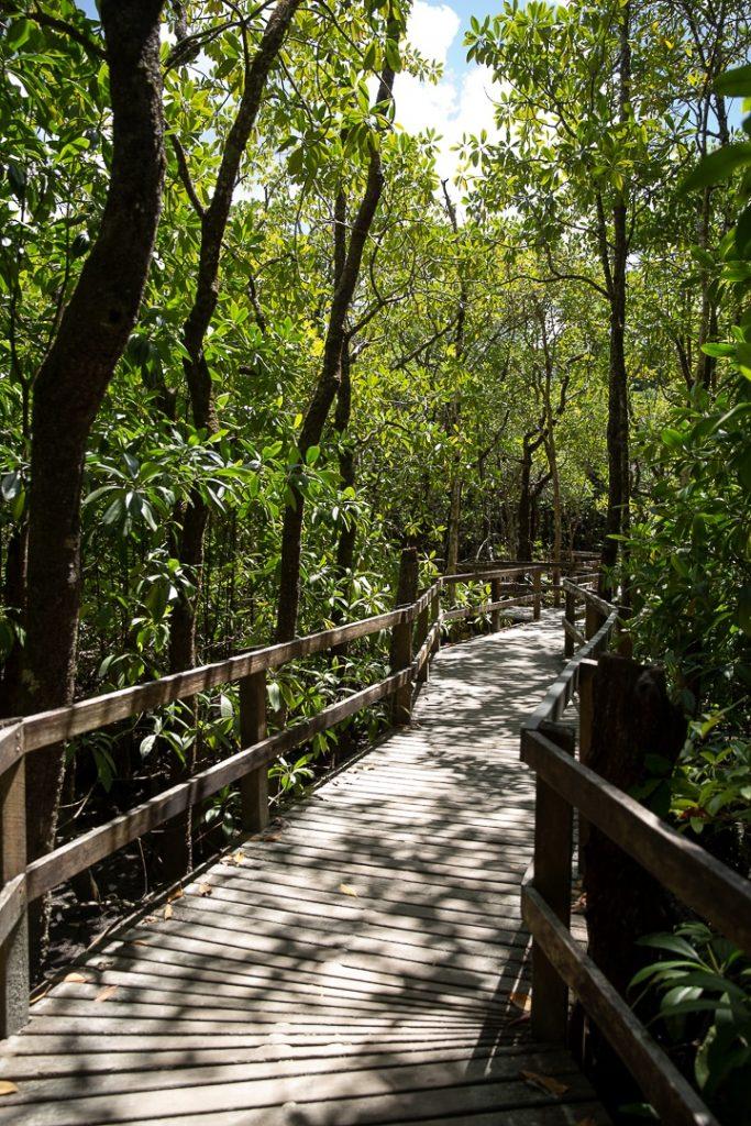 Balade aménagée à travers la forêt tropicale près de Cape Tribulation #queensland #australie
