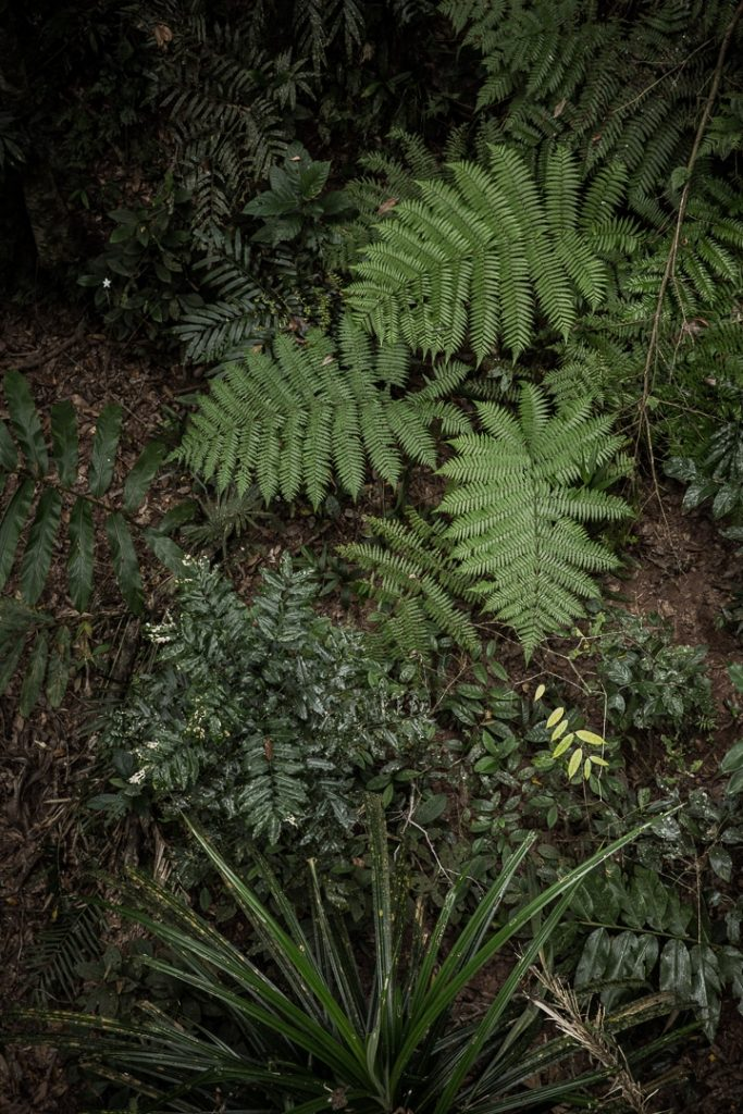 Végétation dans le centre de découverte de la forêt de Daintree #queensland #australie