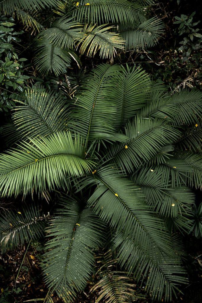 Naturellement beau ! Végétation dans la forêt tropicale de Daintree #queensland #australie