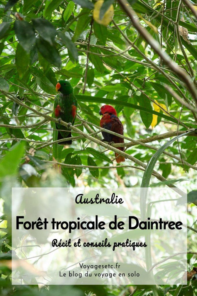 Découverte de la forêt tropicale de Daintree en Australie. Que voir, que faire, où dormir ? #australie #queensland